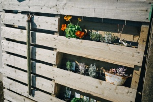 木製パレットで植物ラック