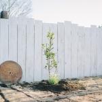 ポタジェに苗木を植える