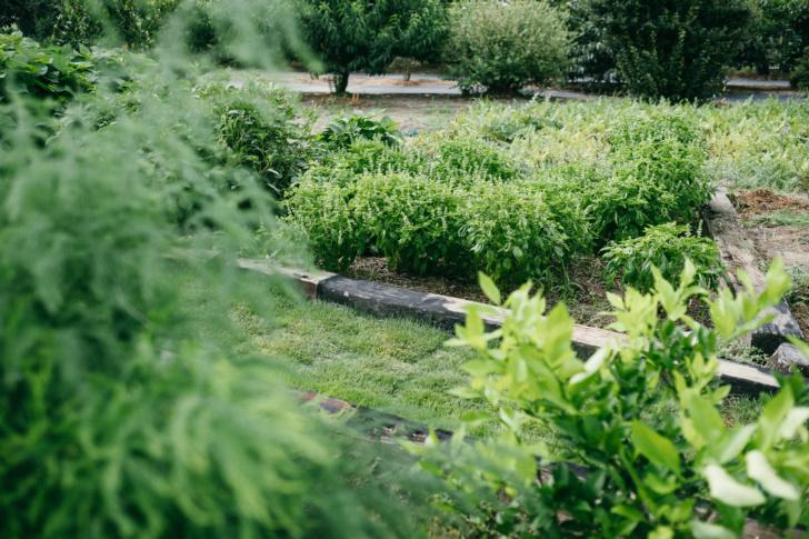 太陽エネルギーと食べきれない野菜