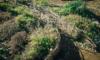 ポタジェガーデンにアクセントを。植物の枝を編んで作る簡単で雰囲気抜群の小さな柵