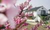 春の香り、春の色